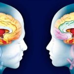differenze tra il cervello di un uomo e quello di una donna